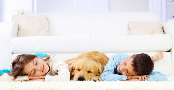 Big Steamer Carpet Cleaning - Safe for Children and Pets 600x312